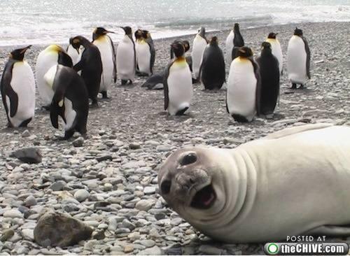 seal-crop-job-1